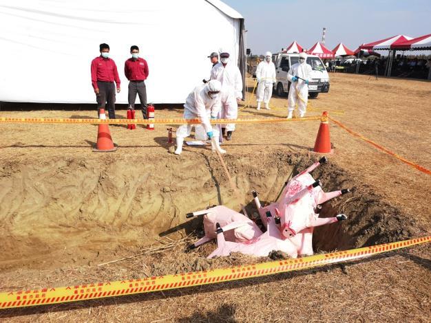 非洲豬瘟模擬演習照片2
