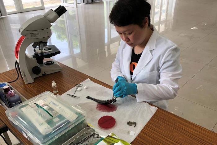 圖2、大雨過後魚蝦疾病多,動保處提供疾病檢驗相關服務。