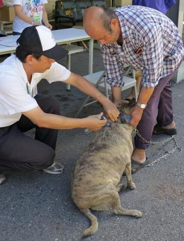 圖四、動保處於山上區舉辦狂犬病巡迴注射活動,民眾踴躍帶狗狗前往注射並在資深獸醫迅速施打下完成狂犬病疫苗施打。