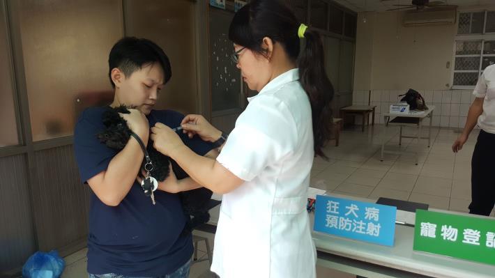 圖二、動保處於新化區舉辦狂犬病巡迴注射活動,民眾踴躍帶愛犬前往注射,由美女獸醫親自施打。