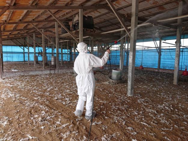 圖二、學甲區火雞場確診禽流感進行撲殺處置及場內消毒