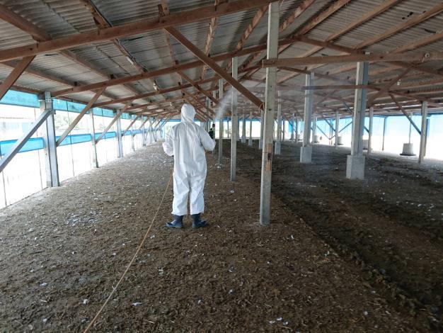圖二、禽流感案例場撲殺處置情形及消毒作業。