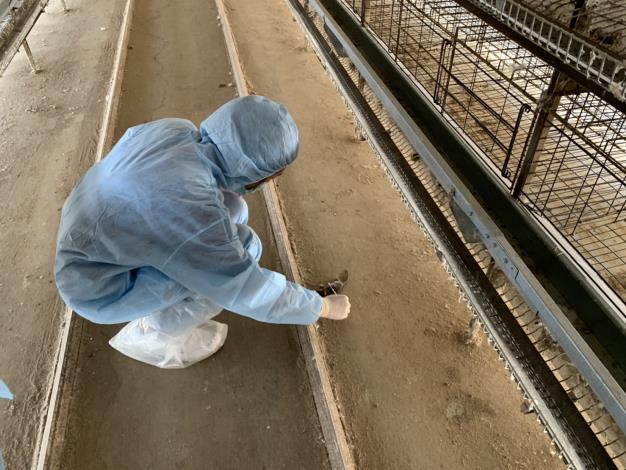 圖四、環境因子監測採樣進行養禽場地板採樣