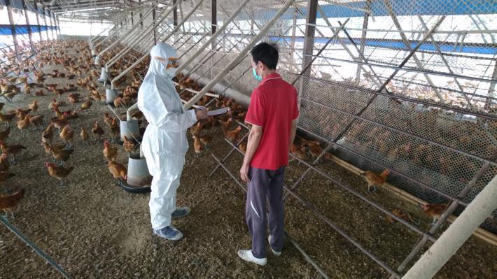 圖一、動保處防疫人員進行養禽場逐場查核輔導