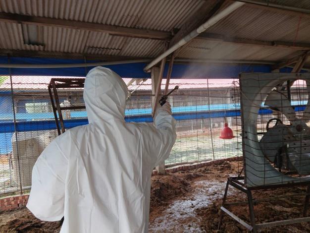 圖四、動保處於下營區禽流感案例場撲殺處置情形及消毒作業。