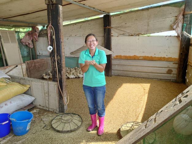 圖二、農業局動保處輔導種植鴨間稻農民,加強防範鴨隻坦布蘇病毒