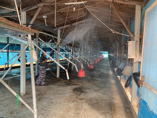 圖一、養禽場畜主進行禽舍內消毒工作,防範疫病發生