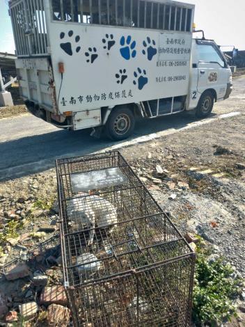 圖二、北門區玉港里於1月5日及1月6日以誘捕籠捕捉之3頭遊蕩犬