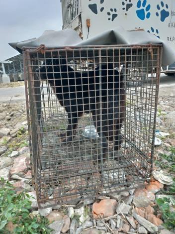 圖四、北門區玉港里於1月5日及1月6日以誘捕籠捕捉之3頭遊蕩犬
