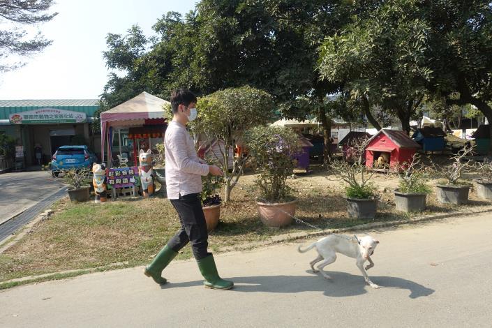 圖2-初春的好天氣一起陪狗狗散步去。