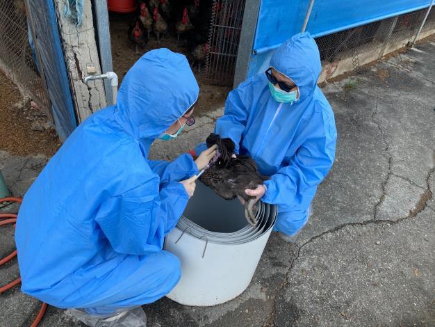 圖一、動保處人員於養禽場執行禽流感防疫監測措施