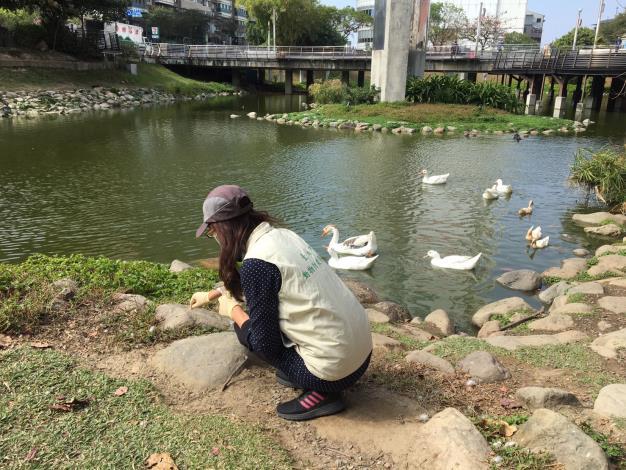 圖四、動保處人員於文化中心執行野鴿等鳥禽之排遺採樣監測