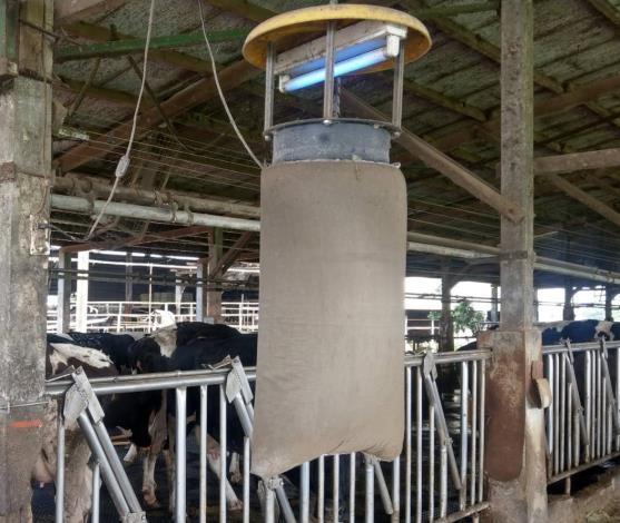 圖二、輔導養牛場加掛捕蚊燈具防範蚊蟲傳播牛結節疹