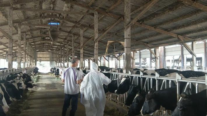圖四、動保處逐一清點牛隻,並輔導養牛業者持續24小時吊掛捕蚊燈