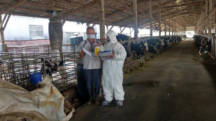 圖一、動保處發放動物用殺蟲藥劑,輔導養牛戶加強滅蚊工作