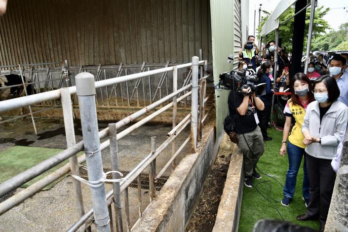 圖三、總統於養牛場外圍視察本市牛結節疹防疫情形