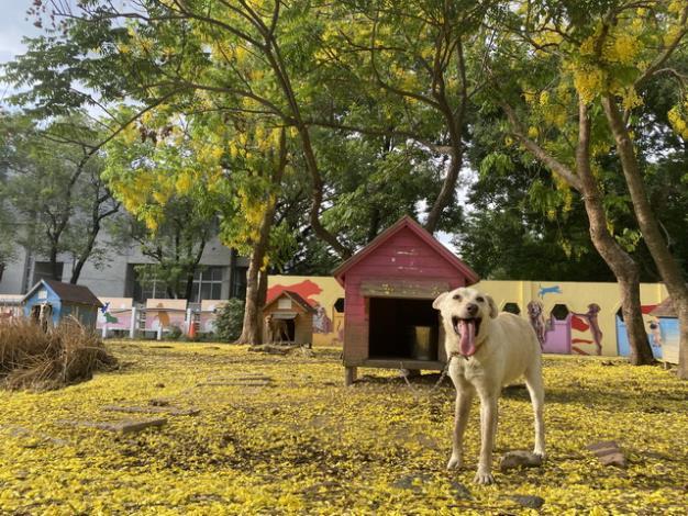 圖二、志工分享動物之家善化站季節限定美照
