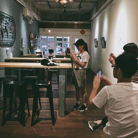 圖四、肥貓咖啡店內消費者與貓咪互動照片。