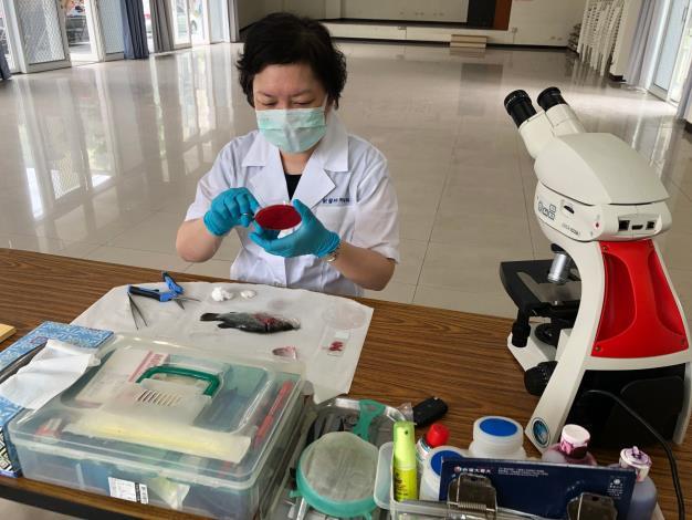 圖三、動保處呼籲如有疫病發生應及早送請水產獸醫師診斷並遵守安全用藥,以減少不必