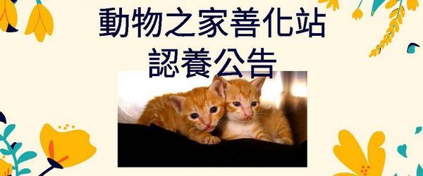 動物之家善化站認養公告
