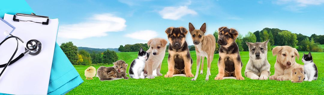 Welcome image with cats, dogs, chicken and a mouse