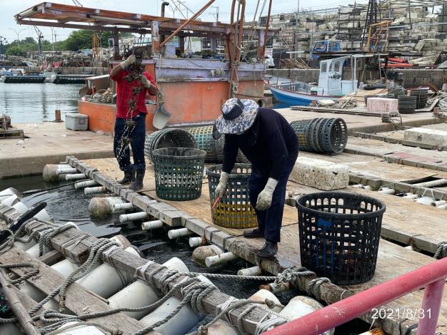 巡獲非法養殖牡蠣