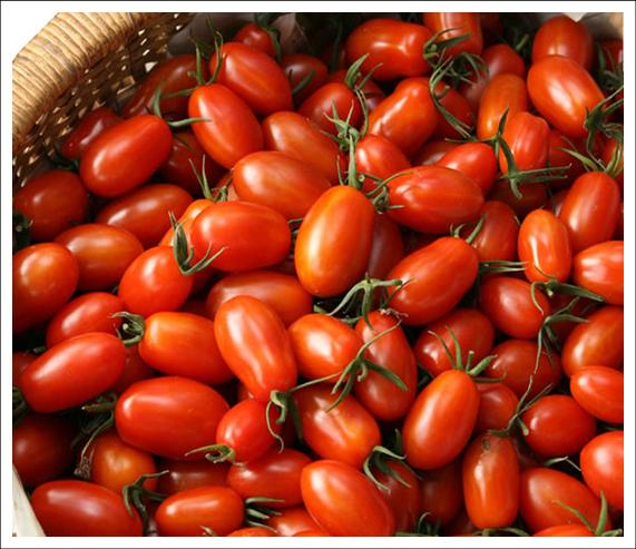 學甲區農漁牧產品 蕃茄