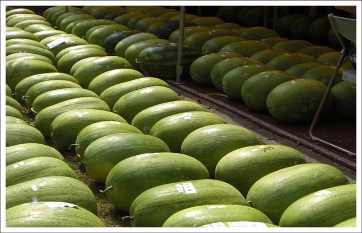 學甲區農漁牧產品 西瓜