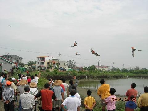 紅鴿笭 (圖)