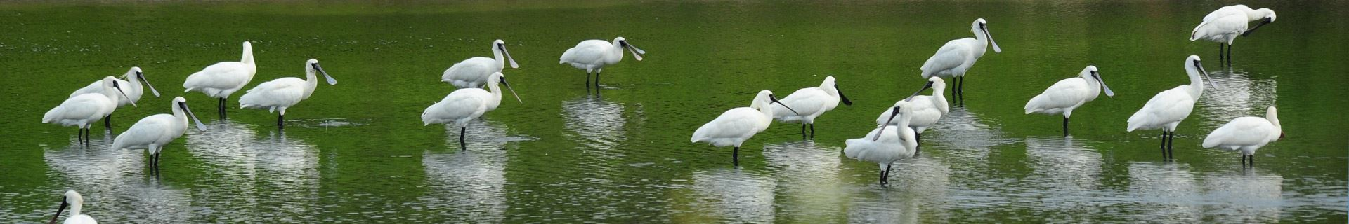Black-Faced Spoonbill Reserve