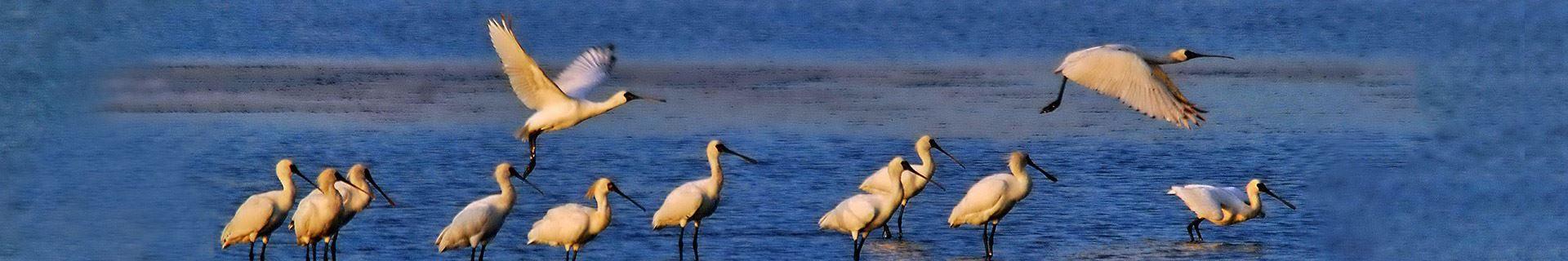 Zengwen Estuary Wetland