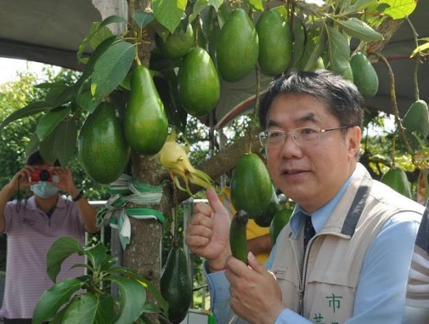 臺南市長黃偉哲與各品種酪梨合影