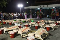 阿立母夜祭3-午夜過後,進行「點祭」,由尪姨持刀背敲打豬頭,並隨即掀開白布、翻仰豬身,象徵性起割一下豬體各部位,表示諸神已點收了。