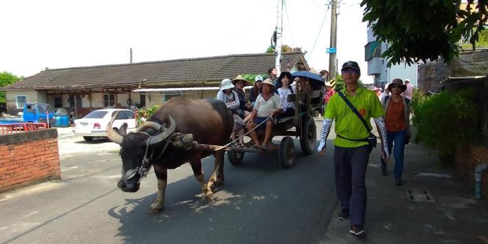 乘坐牛車繞景點