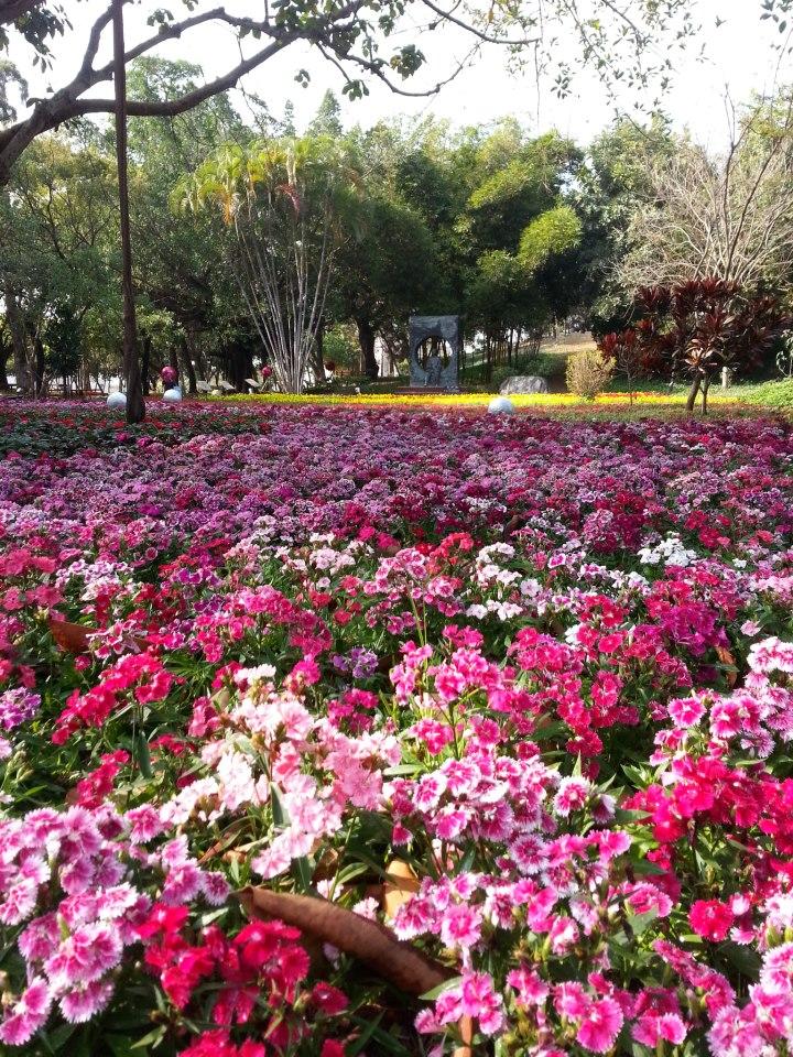 關於佳里之佳里公園花卉
