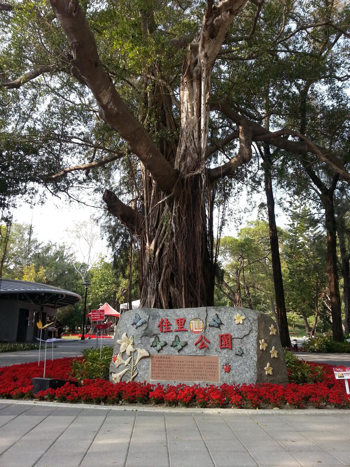 關於佳里之公園榕樹