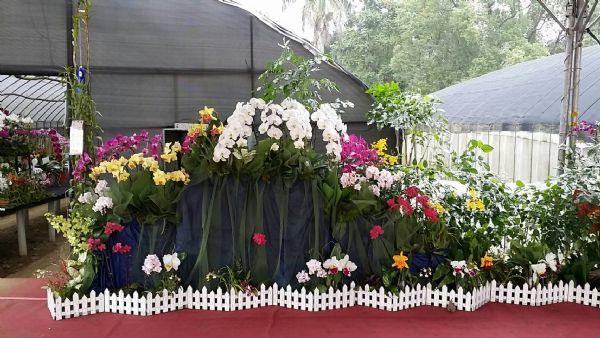 迎春賞花山上祈蝠(照片)8-蘭花展舞台區一隅
