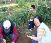 居民享受種植蔬菜的樂趣