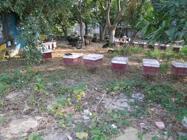 休閒農場內的養蜂場